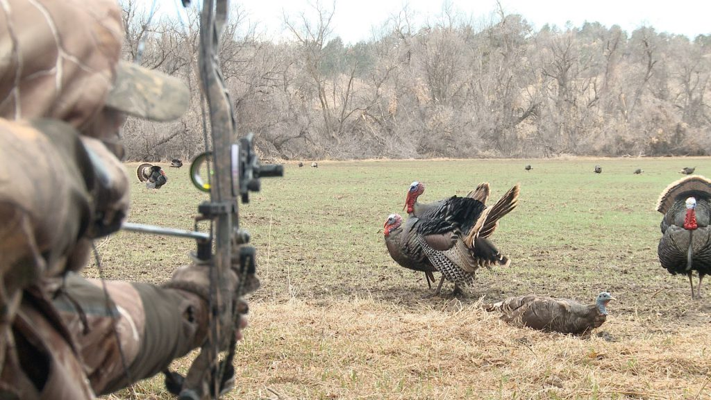 Turkey Bow Hunting