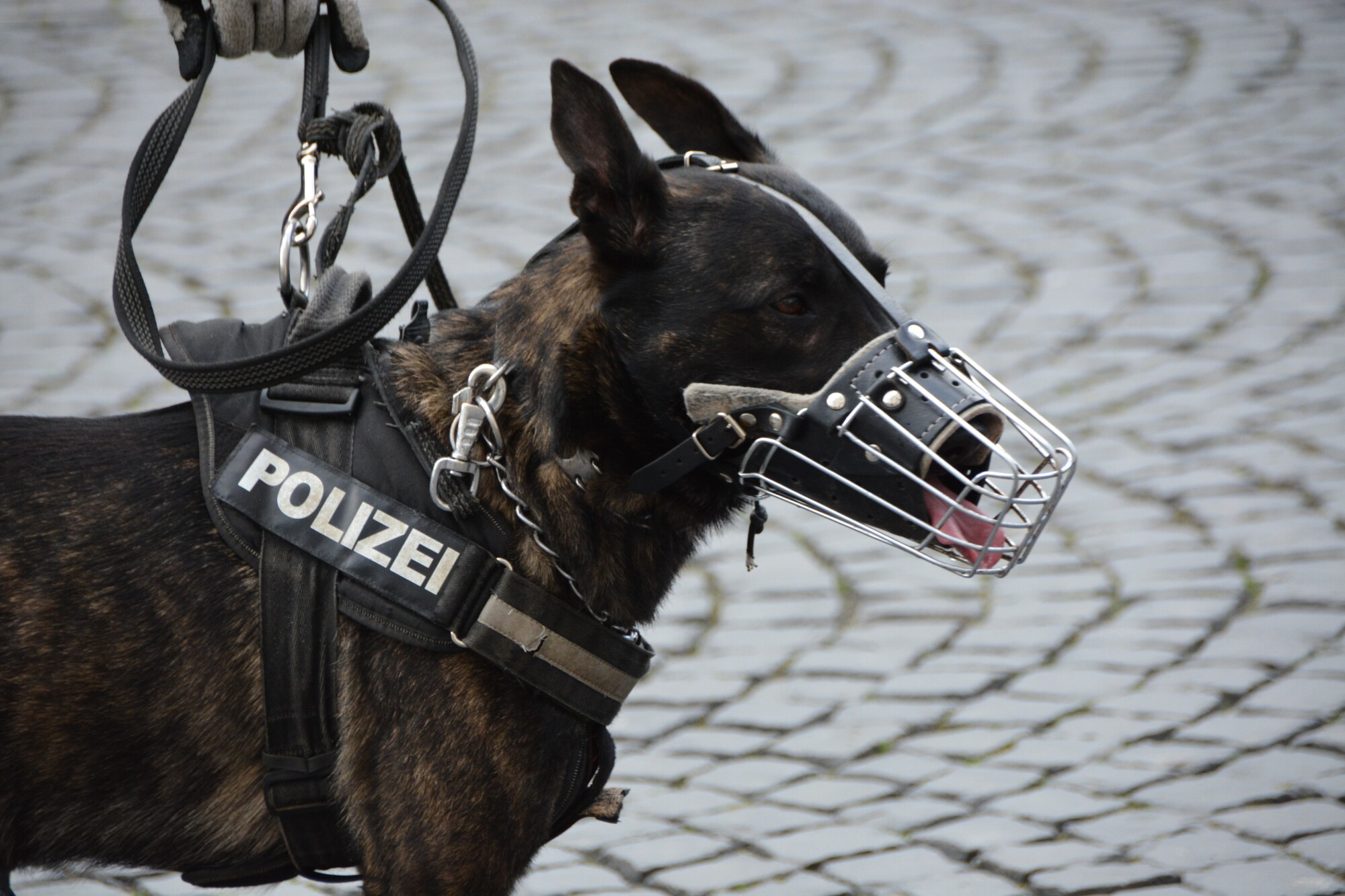 Candid K9 Concepts: What Are Police Dogs Exactly?